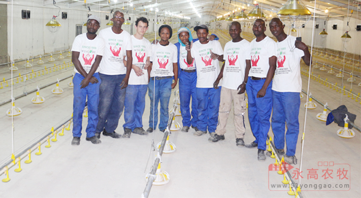 South Africa Poultry Farm Project _Yonggao Farming Cooperative Project