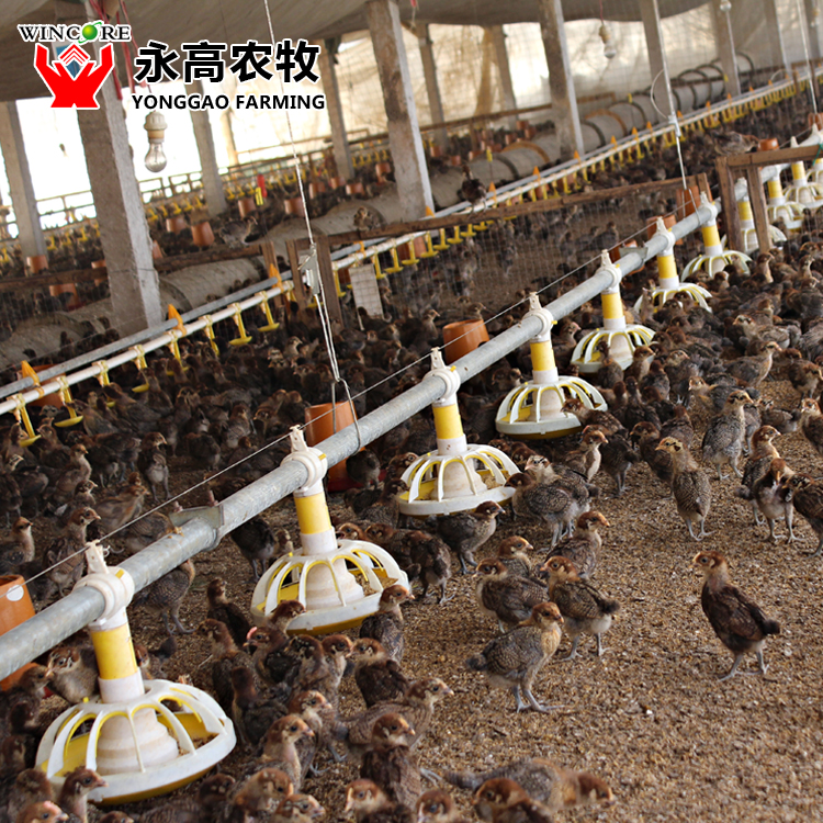 Auto Broiler Feeding System